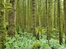 I took this picture It is of a  year old temperate rain forest in British Columbia x