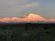 I was hoping to at least get a glimpse of the mountain during my stay but sometimes you get really really lucky Alpenglow on the Tall One in Denali National Park Alaska