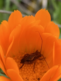 I went to take a photo of this lovely orange flower and discovered this little taking a snooze
