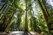 I went to the Jedediah Smith Redwoods State Park outside of Crescent City CA this weekend