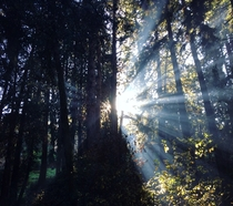 I witnessed the sun playing Hide and Seek in the Forest of Nisene Marks State Park CA