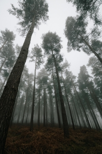 I woke up to thick fog yesterday morning and I dont think a forest looks better in any weather - Cannock Chase Staffordshire UK