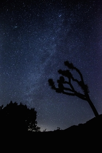 I wonder if any of those other solar systems also have Joshua Trees