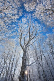 Ice and snow cling to the trees of a mountain forest in Western North Carolina