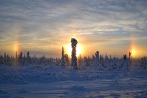 Ice crystals suspended in air help create this phenomenon called a sundog Near Anchorage AK