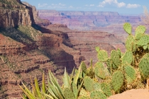 Im hot just looking at these sun bathing cacti at the grand canyon  x
