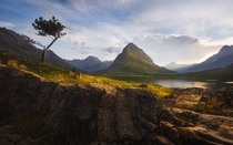 Im jealous of the view this tree gets every single day Glacier National Park MT  mattymeis