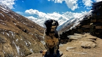 Im not really a photographer I found that dog just waiting for someone to take a picture of him That picture was taken at Annapurna Nepal