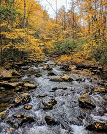 Im so ready for fall Great Smoky Mountain NP
