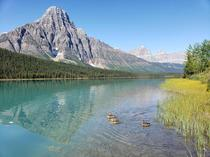Imagine that waterfowl on waterfowl lakes