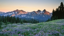 Imagine yourself in this blissful meadow overlooking the Tatoosh Range
