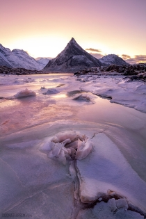 In Lofoten Norway at dawn the sky has a pink hue I noticed this formation on a forzen lake which I thought looked like a rose