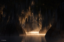 In The Heart of the Swamp by George Popp Taken in the Atchafalaya Basin a few miles from where I grew up Or you know The Heart of the Swamp