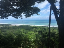 In the Trees of Puntarenas Province CR