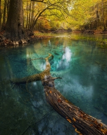 In the Trees Woods amp Forests category Autumns Emerald by Paul Marcellini Chipola River Florida USA