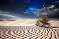 Incredible conditions in the newest national park White Sands NP NM