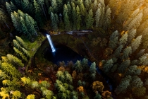 Incredible fall colors at Silver Falls State Park OR
