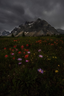 Indian paintbrush and Aster brighten a moody scene x OC Instagram jeremy_bishop