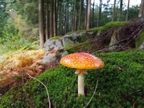 Inedible beauty in the woods of Danish island of Bornholm