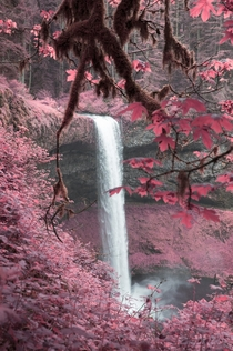 Infrared photo of Silver Falls Oregon OC x IG seanrvalentine