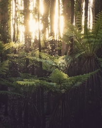Insects swarm amongst the tree ferns - Australia