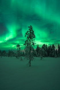 Intense Aurora display in Finnish Lapland - Feb    x