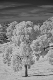 Invisible landscape - a park in Los Angeles shot in gtnm infrared