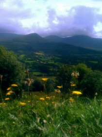 Irelands Golden Vale