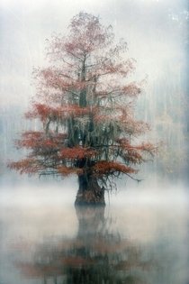 Is it too early to bring out the Christmas Tree Caddo Lake Texas