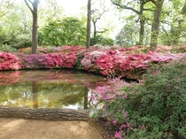 Isabella Plantation at Richmond Park Surrey England