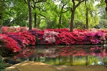 Isabella Plantation Richmond Park London UK  - More pics here httpimgurcomgalleryimII