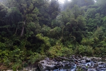 Isolated rugged and and wild Ancient Podocarp rainforests in the Te Urewera National Park New Zealand