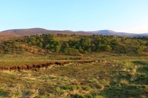 It always has a very African plains feel up here during summer Wicklow Mountains Ireland