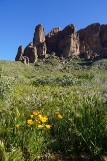It is spring in Arizona and these flowers are over place Treasure Loop Trail Arizona OC