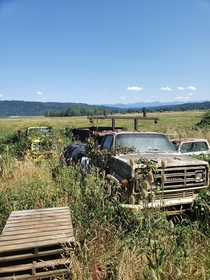 Its always pretty cool to see these old trucks left on these farms for ages