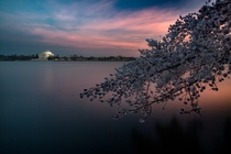 Its Cherry Bloom Season in DC