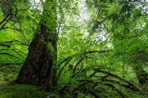Its easy to get lost in the dense green forests of the McKenzie River Trail in Oregon