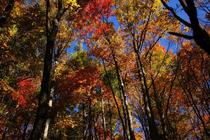 Its fall in North Carolina - from the Appalachian Trail