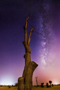 Its hard to escape the light pollution in Dubai but heres an image I caught of the Milkyway on the outskirts next to demon faced tree