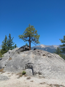 Its lonely at the top Tuolumne Meadows Yosemite National Park CA
