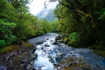 Its not as grandiose as most here but this is one of my favorite pictures I took in NZ on the way to Milford Sound