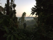 Its rather easy to miss the distinction between the coffee plantations and the forest Coorg India  OC