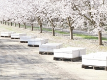 Its That Time Of Year In CA Bee Boxes Put Out For Almond Pollination