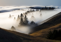 Ive been photographing fog a lot this past year Heres one of my favorites taken in mid-June in Marin County California
