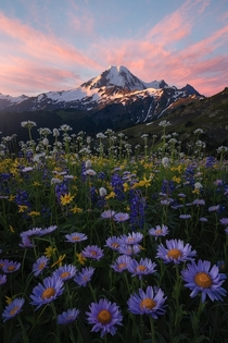 Ive been trying to get this shot for four yearslast week everything finally came together while backpacking around Mt Baker OC  ross_schram