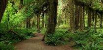 Ive been waiting years for a chance to visit this beautiful place - Hoh Rainforest WA x