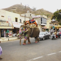 Jaipur - Where Traffic Jams caused by Elephants is not a rare sight