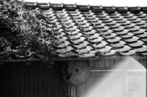Japanese house with a massive hornet nest