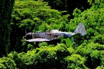 Japanese Mitsubishi Zero still stuck in a tree since WW Papua New Guinea Unknown Photographer