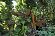 Japanese small artillery left over from World War II on Palau island Micronesia